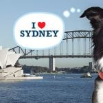 Sydney Dog Lovers Show Wrap Up