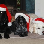 Do Dog's Believe In Santa?
