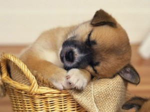 Napping-Pup-632x474