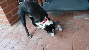 Ted, keeping cool with icecubes