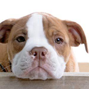 Calm Dog Anxiety