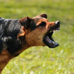 Reactivity In Dogs